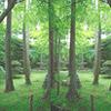 第4回 木の建築賞