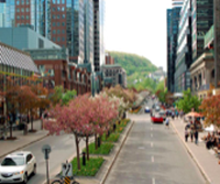 McGill College: An Avenue Reinvented